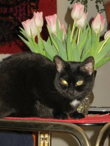 Annbelle ja tulppaanit